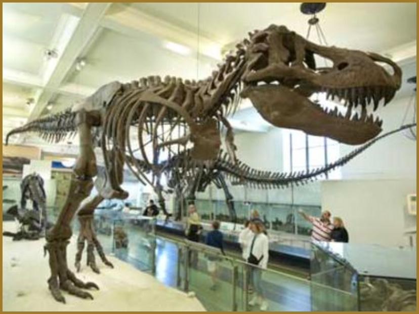 Nyc Natural History Museum Membership
